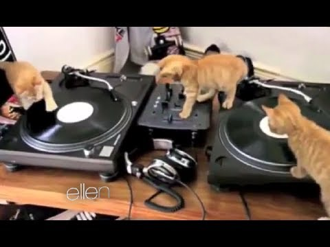 ellen-show-today-:-here's-my-talent,-animal-style-|-full-interview-hd