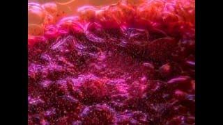 Enosis Meraviglia [3] La Fermentazione