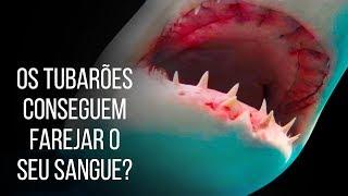 Será Que Os Tubarões Conseguem Mesmo Farejar Sangue A Metros De Distância?