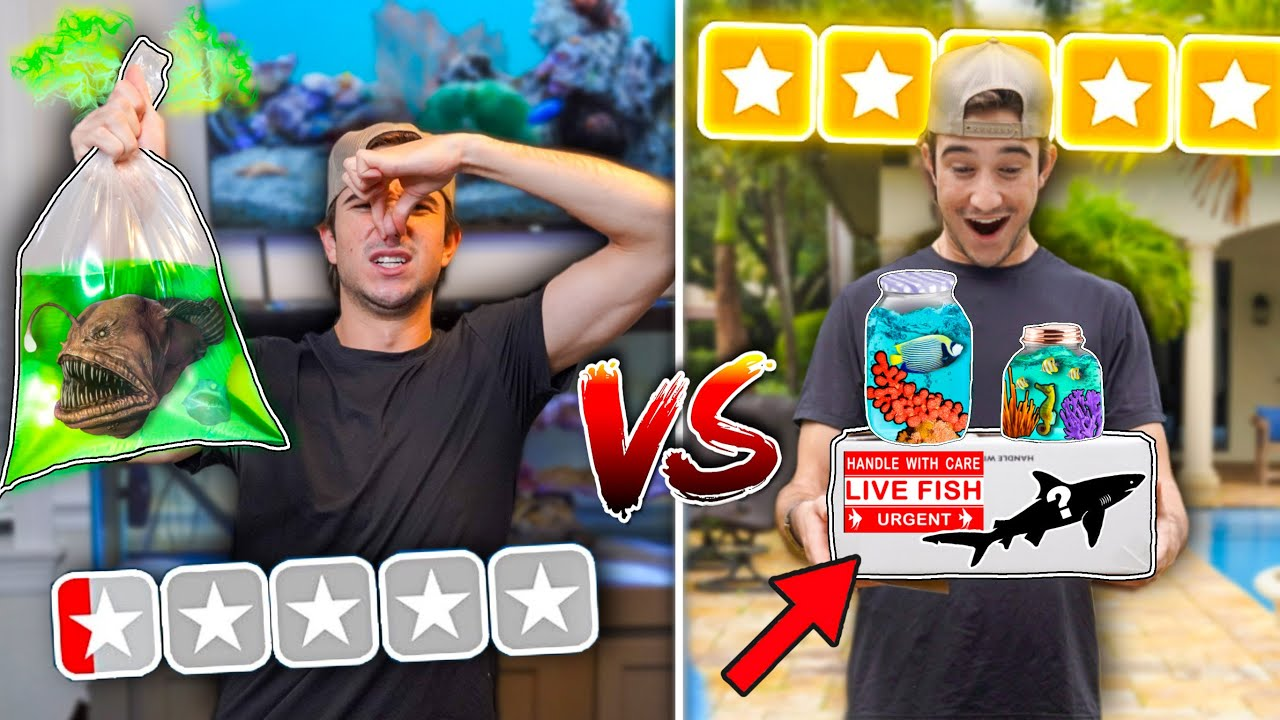 BEST VS WORST RATED MYSTERY FISH BOX! (shark inside)