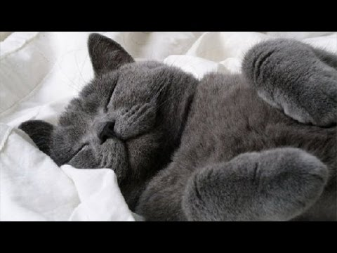 Waking up sleepy pets – Cute pet compilation