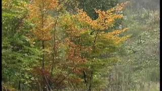 Video Four Seasons - Autumn - Vivaldi download MP3, 3GP, MP4, WEBM, AVI, FLV Maret 2018
