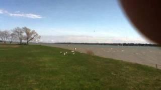 Floating Seagulls..?