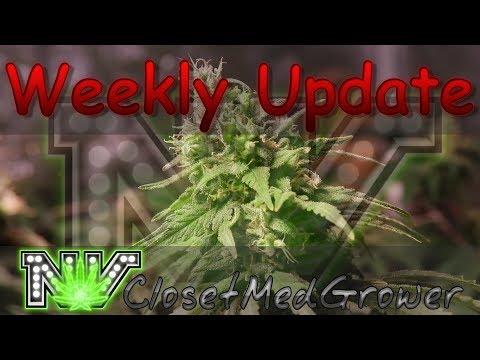 Weekly Update 10/26/17