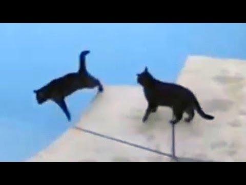 Chat drôle pousse l'ami noir dans la piscine - FUNNY AFV CATS