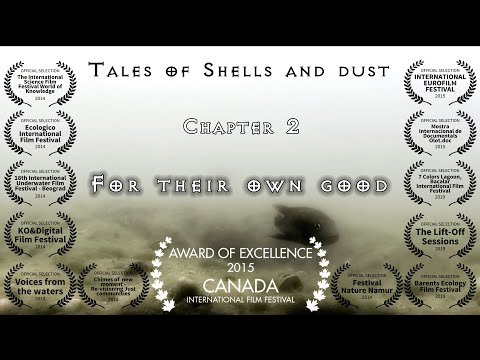 Tales of Shells and Dust - Chapter 2 of 7 - With, under and without
