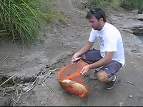 pesca de carpas 18-12-10.wmv Travel Video