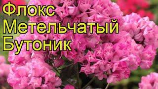 видео Купить флоксы в Украине | Саженцы флоксов от GreenMarket