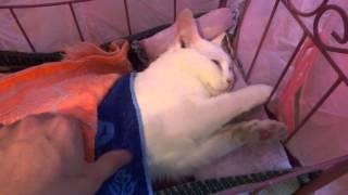 Bed for cat. Кроватка для кошки.