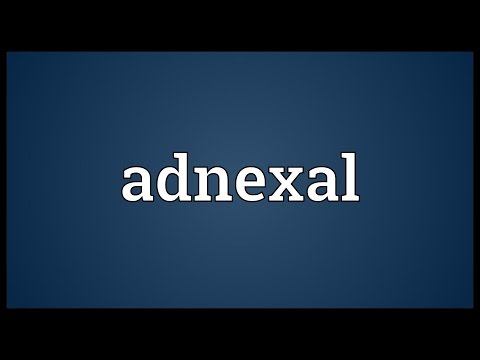 Adnexal Meaning