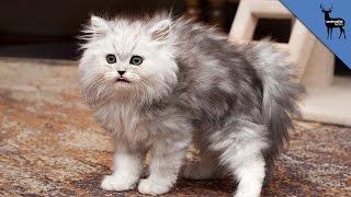 Why Do Cats Spray Urine?
