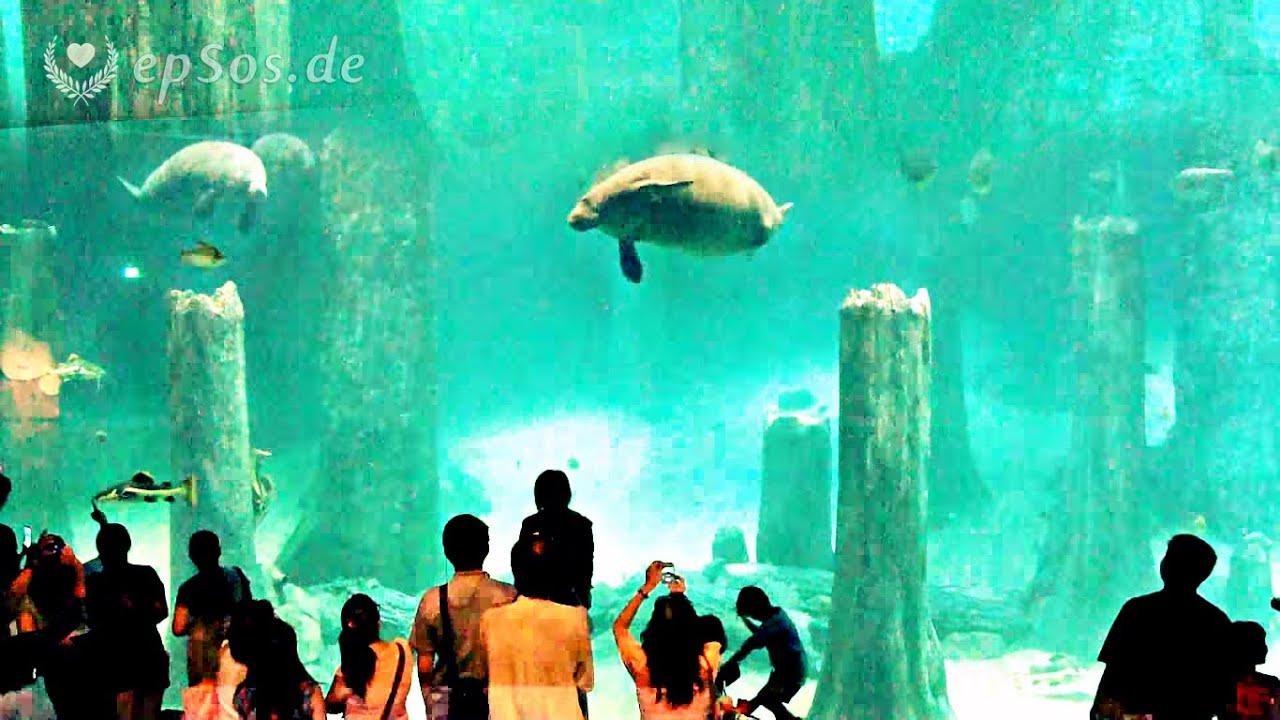 Aquarium fish tank singapore - Aquarium Fish Tank Singapore
