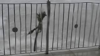 Best Hurricane Irma live footage recorded Marathon Florida   more here https://youtu.be/n7BzBCee4iU