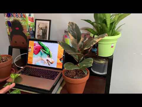 Variegated Rubber Plant (Ficus Elastica Red Ruby) & TIPS!