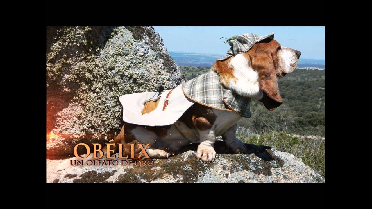 Concurso Perros Detectives Rastreator  Oblix y Falbal