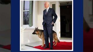 חברו הטוב של הנשיא: הכלבים חוזרים לבית הלבן