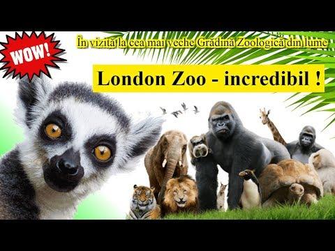 Ep.44 - London Zoo - incredibil! In vizita la cea mai veche Gradina Zoologica din lume