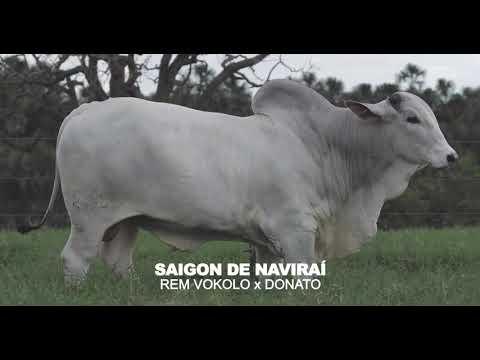LOTE 12 - SAIGON DE NAVIRAÍ