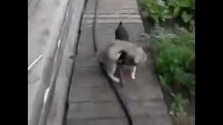 cat is taken to home / кота несут домой