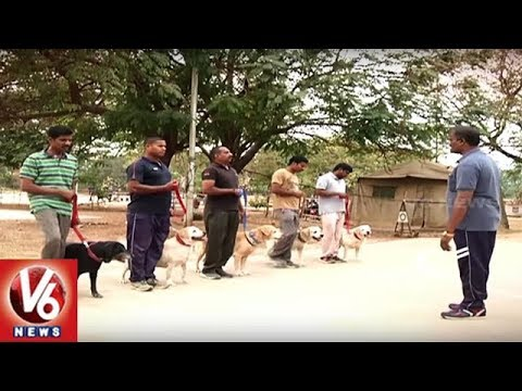 Police Dog Training At Integrated Intelligent Academy | Ground Report | V6 News