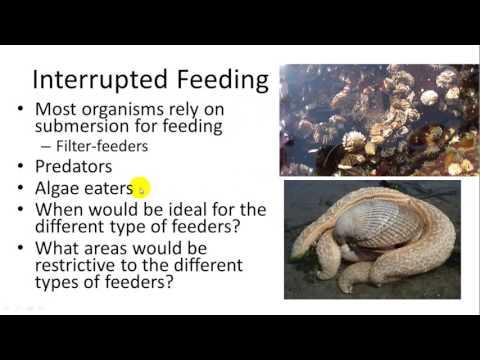 Intertidal Zone and Estuaries