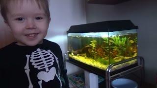 Аквариумные рыбки гуппи запускаем в аквариум
