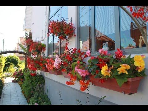 tuto quelles fleurs planter dans des jardini res l 39 ombre les b gonias youtube. Black Bedroom Furniture Sets. Home Design Ideas
