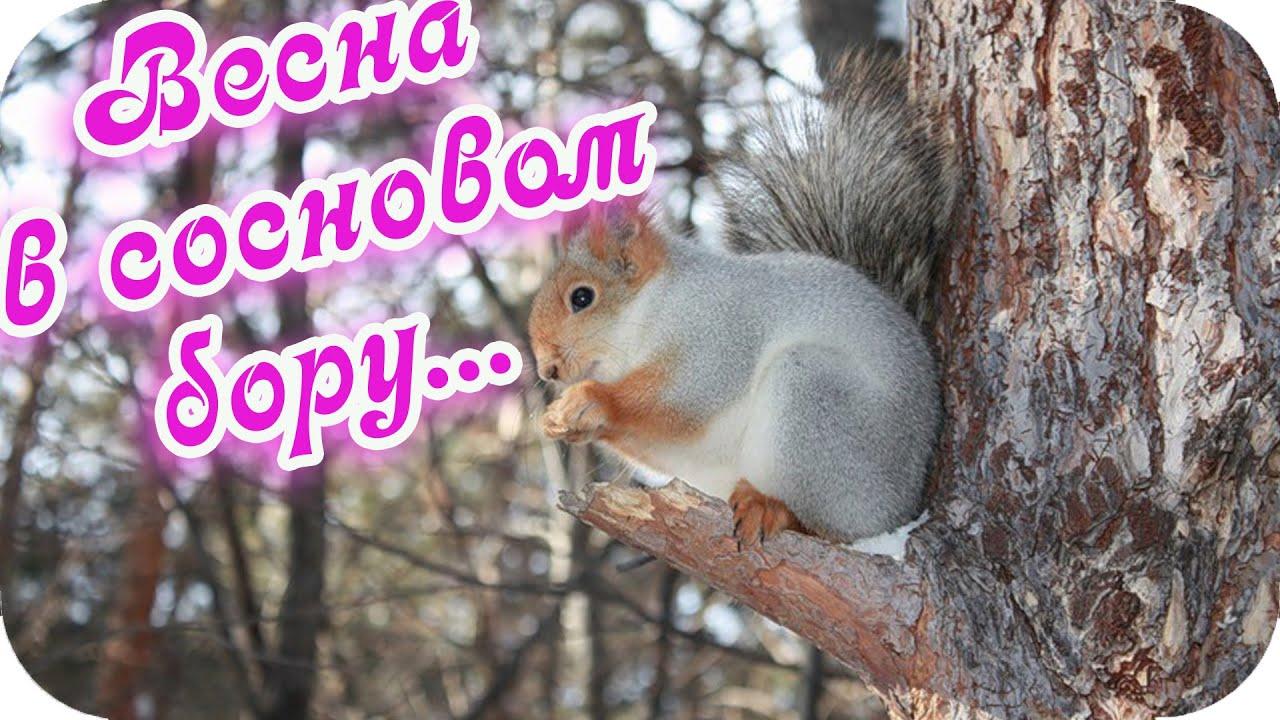 Доброе утро! 🌸Доброго дня желаю!🌸 Весна в сосновом бору 🌸Позитивный видеоролик🌸Good morning!🌸