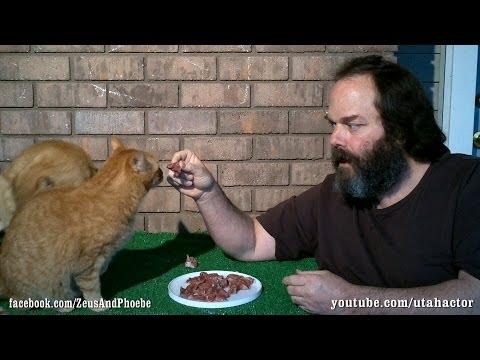 Raw Meat Chunks: Keep Your Cats Teeth Healthy
