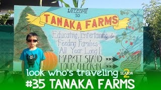 Strawberry Tour at Tanaka Farms: Look Who's Traveling