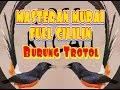 Masteran Murai Full Cililin Mudah Untuk Ditirukan Burung Trotol  Mp3 - Mp4 Download