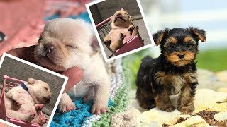 Funniest  Dogs and  Cats -  Funny Pet Animals' Life Videos 2019