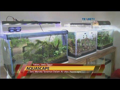 Aquascape , Pemandangan Bawah Laut Dalam Aquarium