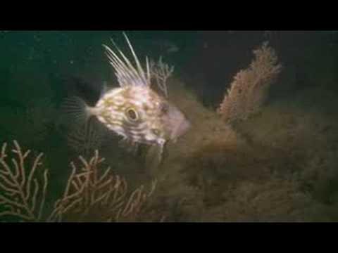 SCUBA Diving the wrecks of the Persier, James Egan Lane, Elk and Maine