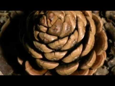 VIRIDIA - Tecnología Natural Episodio 2 - El Mundo Material - Los Secretos de la Naturaleza