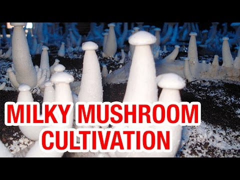 mushroom ki kheti in hindi pdf