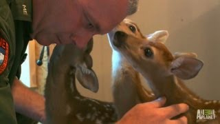 Oh, Deer. A Second Chance for Three Fawns | North Woods Law