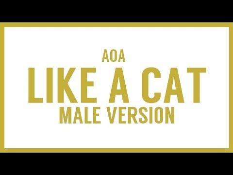 [MALE VERSION] AOA - Like a cat