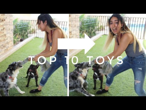 our-top-10-indestructible-dog-toys!-|-made-especially-for-australian-shepherds