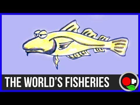 No more Fish? The State of the World's Fisheries