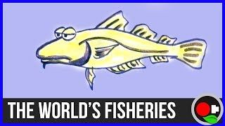 No more Fish? The State of the World