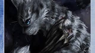 Имена котов ваителей
