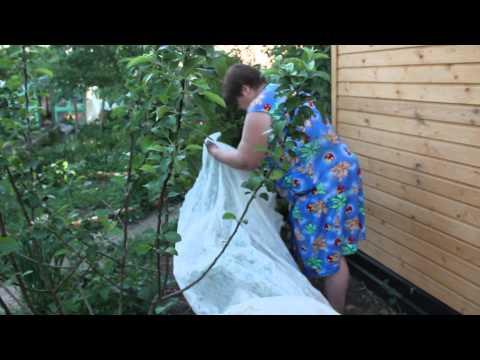 видео: Огурцы. Посадка огурцов.Часть 2. Новый способ. Высокая урожайность.