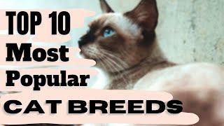 Cats 101 : Top 10 Most Popular Cat Breeds