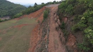 GLOBALink | Habitat suitability decreasing as Asian elephants moving northward in China: Scientist