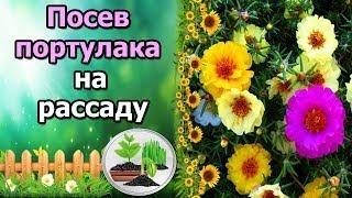 видео Посадка и уход за наперстянкой, основы ее выращивания