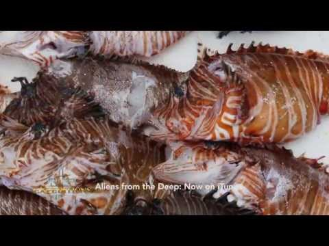 Remote Lionfish Roundup