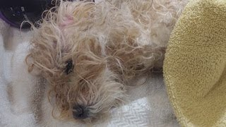 Little dog found severely abused and left to die inside trash bag