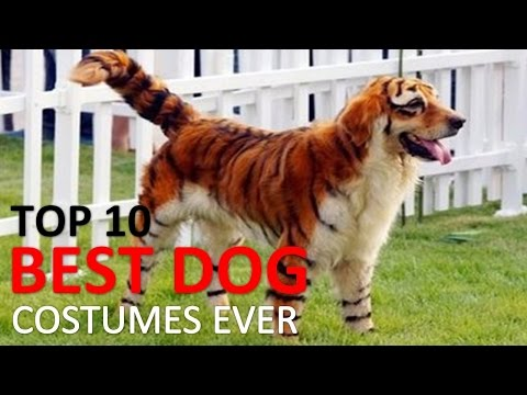 🎃 10 Best Dog Costumes and Creative Halloween Ideas 🎃