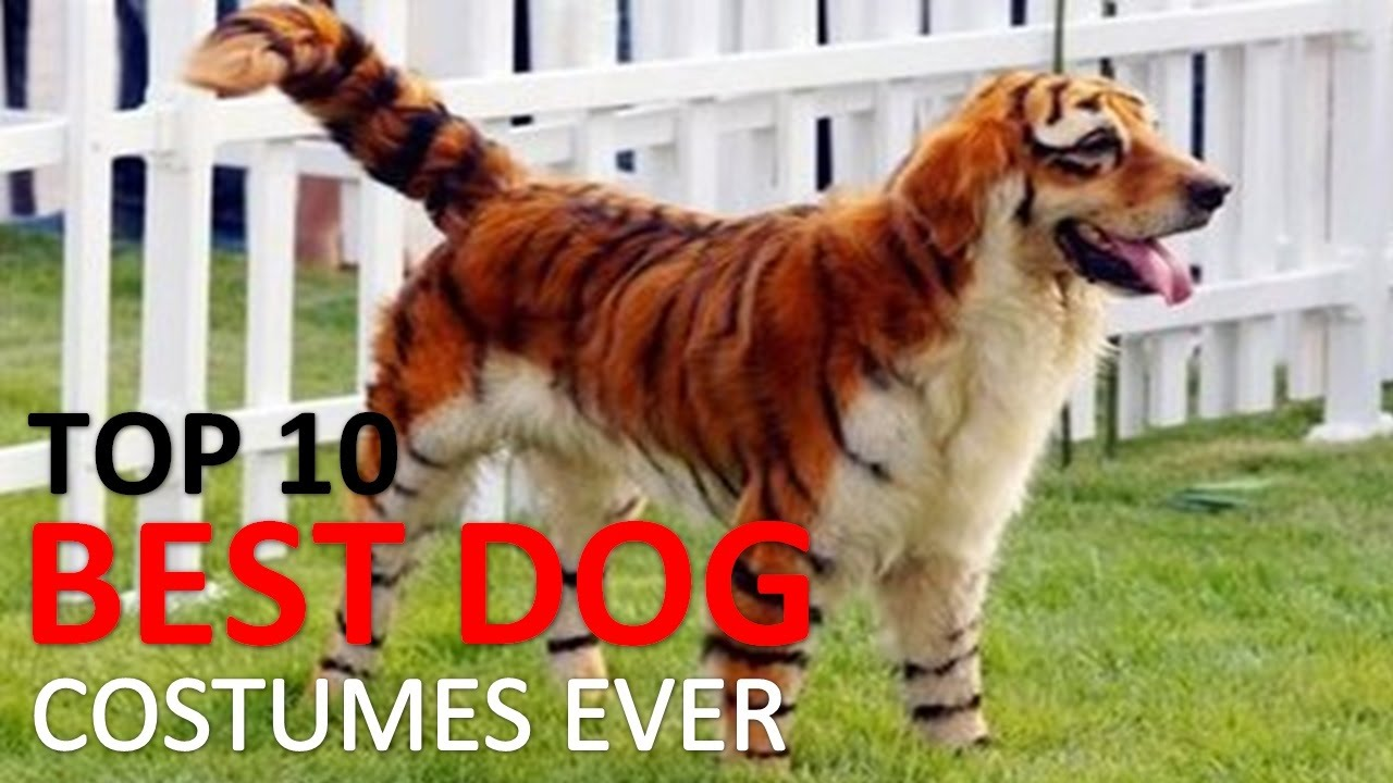 10 Best Dog Costumes and Creative Halloween Ideas  - YouTube